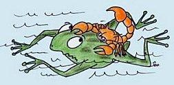 Grenouille_scorpion