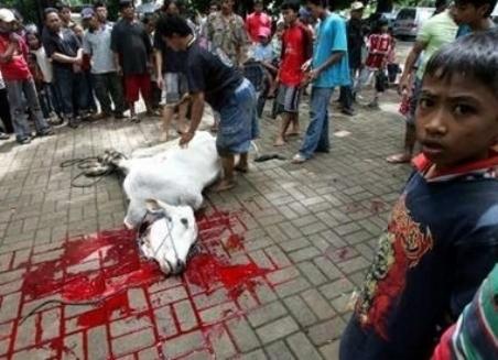 Halal-slaughter-vi