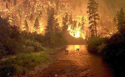 Wildfire-akbar